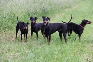 Onze honden 26 mei 2011