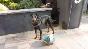 Roxy 3 en half jaar